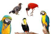 Bird collection — Stock Photo