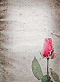Red rose flower old grunge paper texture — Stock Photo