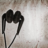 Hudební sluchátka staré grunge papír textury — Stock fotografie