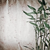 Bamboo old grunge paper texture — Stock Photo
