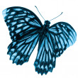Butterfly isolated - Stock Photo