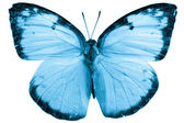 Butterfly isolated — Foto Stock