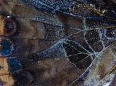 бабочка крыло шаблон текстуру — Стоковое фото