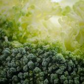 Broccoli macro — Stock Photo
