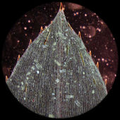 Black alga leaf micro — Stock Photo