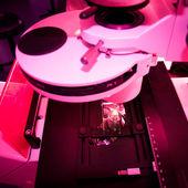 ślizgać się pod mikroskopem fluorescencyjnym — Zdjęcie stockowe