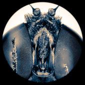 Mikrofotografia maleńkich owadów latać oko — Zdjęcie stockowe