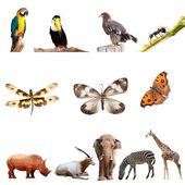 Real animal collection — Stock Photo