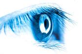 Eye macro — Stock Photo