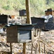 Honey bee hives — Stock Photo #18288565