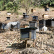 Honey bee hives — Stock Photo #18436199
