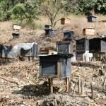 Honey bee hives — Stock Photo #18436199
