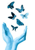 Butterfly on hand — Stock Photo