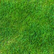 Royalty-Free Stock Photo: Grass background