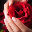 Stock Photo: Rose in hands