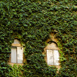 Royalty-Free Stock Photo: Wall covered in ivy