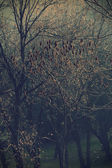 Zaczarowany las — Zdjęcie stockowe