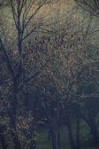 魔法的森林 — 图库照片