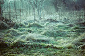 Flattened grass — Stock Photo