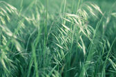 Blades of grass — Stock Photo