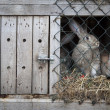 Stock Photo: Rabbits in hutch