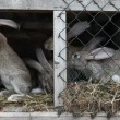 Stock Video: Rabbits in hutch