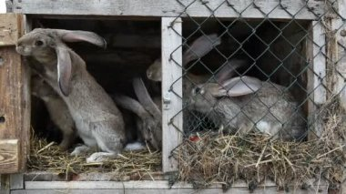Rabbits in a hutch — Stock Video