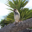 Bird on branch — Stock Photo #16036455