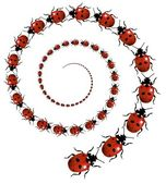 Ladybird Spiral — Stock Photo