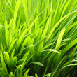 Vibrant Grass — Stock Photo #38727683