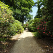 Garden Path — Stock Photo #38845871