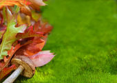 Dubové listí a hub, mechu. — Stock fotografie