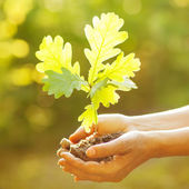 A woman holding young oak tree in hands — Stock Photo