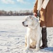 Man and central Asian shepherd walk in the lake — Stock Photo #37364449