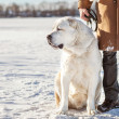 Man and central Asian shepherd walk in the lake — Stock Photo #37364523