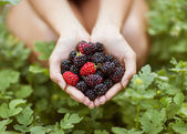 Blackberry in hand — Stock Photo
