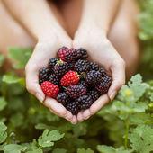 Yardım blackberry — Stok fotoğraf