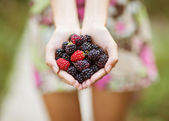 Blackberry in der hand — Stockfoto