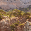Landscape in mountains, mighty pine trees and juniper can. — Stock Photo #38693363