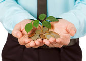 Businessman cover growing plant with coin money — Stock Photo