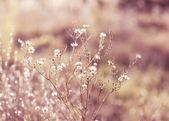 солнечный луг — Стоковое фото