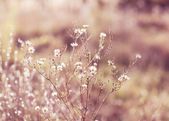 阳光草地 — 图库照片