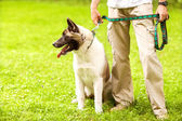 Man and Akita Inu dog walk in the park. — ストック写真