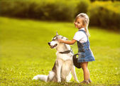 Little girl in the park their home with a dog Husky — Stok fotoğraf