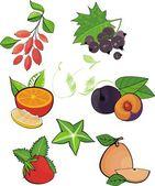 Vector design set: fruits and berries — Stock Vector