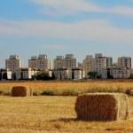 Weizen-Stack gegen israelische Nachbarschaft — Stockfoto