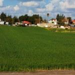 landwirtschaftliche Siedlung, die israelischen — Stockfoto