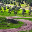 Stock Photo: Winding road neolive grove