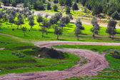 Winding road nea olive grove — Stock Photo