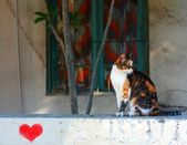 Cat on tryst — Stock Photo